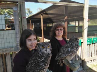 Getting to know the owls better at Spier