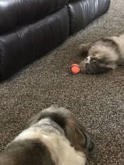 Sometimes he teases Buddy with the ball