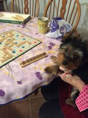 Our latest in home guest. Nala playing Scrabble.