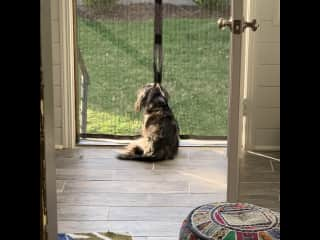 I love to sit in the back door and watch the birds and bunnies and squirrels!!