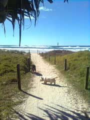 Going to our dog beach