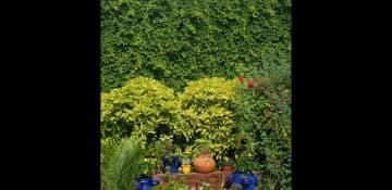 My old garden in Brooklyn 2020