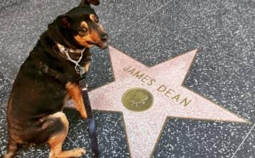 Hollywood pup