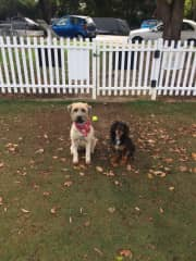 Gordie and Tooque, Longueville