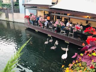 Guests for lunch in town