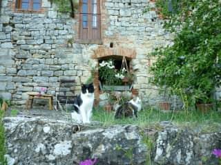 Tuscan kitties
