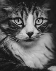 Tara by catsitter Ed!