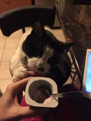 Sharing breakfast with Jersey (on a pet sit)