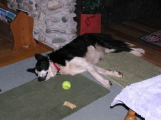 Cab, our precious border collie. He sure likes to fetch that ball!
