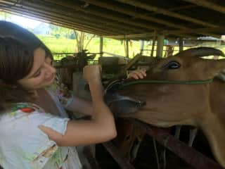 Our daughter with a cow in Bali