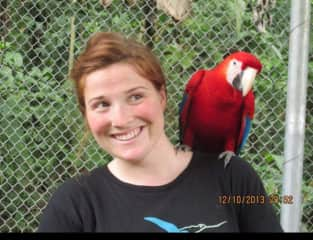Rescued scarlet macaws in Mexico being trained for the wild