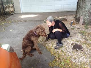 Saying goodbye to Scooter, the labradoodle.