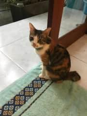 Gypsy the tiny Diva