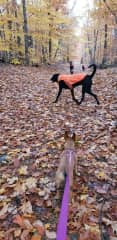 Autumn walks with Azul, Ruby and friends