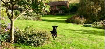 Ruby  ( housesitting stogumber ,Taunton ) see review
