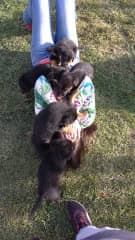 """My girlfriend Camila and the """"terrible"""" puppy stampede"""