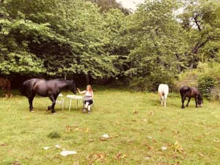 Horse Lover. Since age of 5. Grew up on the countryside with 3 horses and a little from my mothers side.