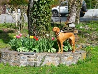Lexi amongst the tulips