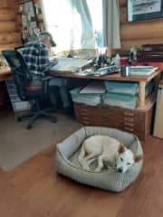 Willow rests while Rick works.