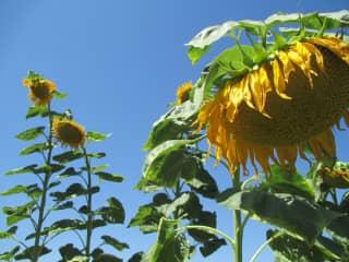 I love to grow flowers, herbs, citrus & veggies.