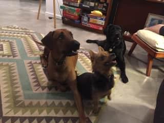 Reggie, Winnie and Wilma