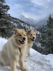 My two newest friends Oesa and Odin in Canmore Alberta
