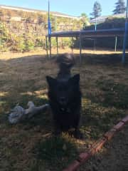 Karli playing ball
