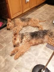 Taking up space on the kitchen floor  of course!