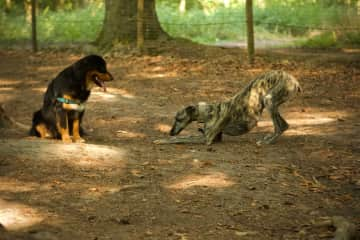 With friend Tuur in the dog park