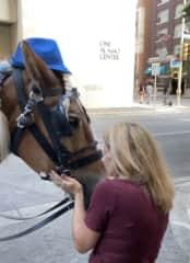 Loving this beautiful horse on the streets of San Antonio ❤️