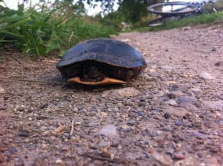 trail biking and coming across a shy turtle