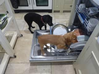 Who needs a dishwasher?