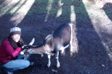Michelle and Sailor the hungry goat in BC, Canada.