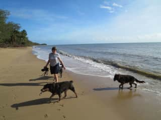 Linda walking Shadow, Tia and Pepper on Four Mile Beach, Port Douglas