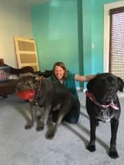 Kim with some big old Mastiffs