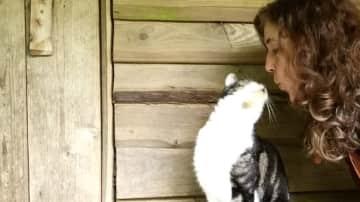 Catsitting in the Netherlands