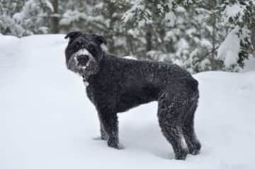 Devi enjoying some snow on our recent trip to Maine.