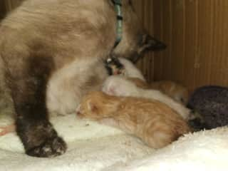 During our housesit in France, the cat give birth to 4 kittens. We sent the owner pictures. She was very happy how we handled the situation
