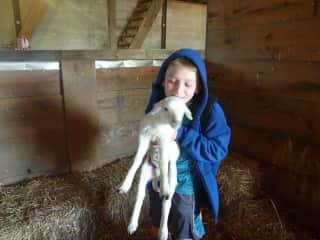 Our son with newborn Katahdin lamb