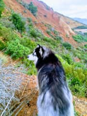 Storm on the mountain,her favoirite place!