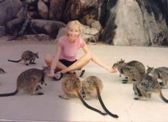 Feeding rock- wallabies in Australia