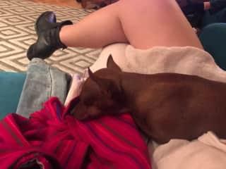 Looking after my cousin's dog Ada in Belgrade