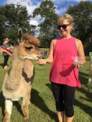 Pam explores an alpaca's world