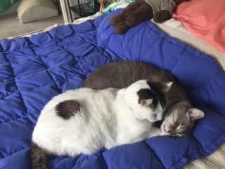 Kitties snuggling