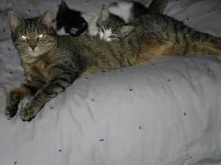 Shannah , Becky & Randolf