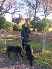 Wonderful walks with Gozi and Mungo (Kent, England Nov 2016).