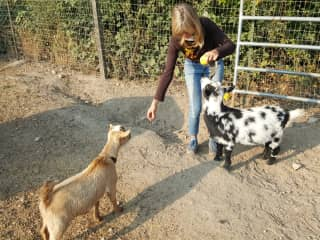My little goats and I