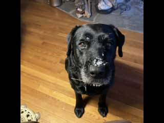 """My shadow while at home and walking buddy """"Onyx""""."""