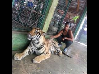 Tiger love in Phuket