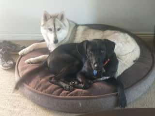 Mishka and Kuro